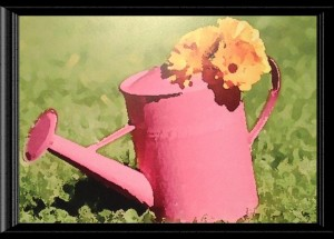 pink watering can by Al Pirozzoli